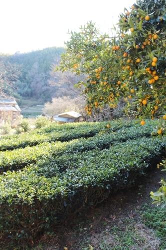 柿でつながる!_b0220318_20015791.jpg