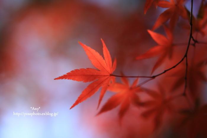 秋をいつも探してた * 2015_e0347431_21115033.jpg