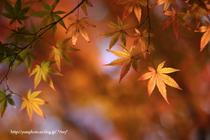 秋をいつも探してた * 2015_e0347431_21120694.jpg