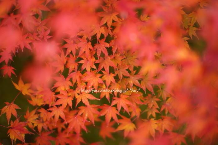 秋をいつも探してた * 2015_e0347431_21121401.jpg