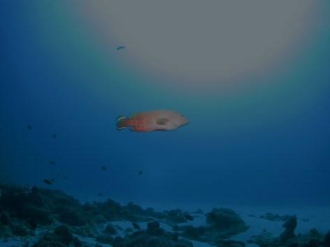 12月29日年末水納島最高~_c0070933_22133723.jpg