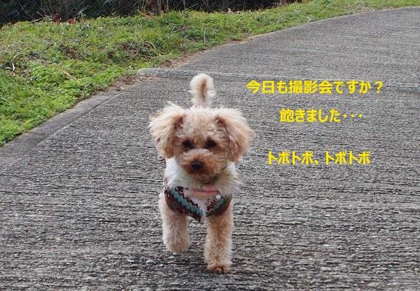 b0149340_214522.jpg