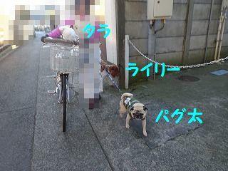d0353074_17470801.jpg