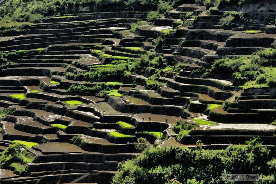 """水牛と山岳民族の """"循環する暮らし~フィリピン山岳地方でホームステイの旅~_b0128901_00180382.jpg"""