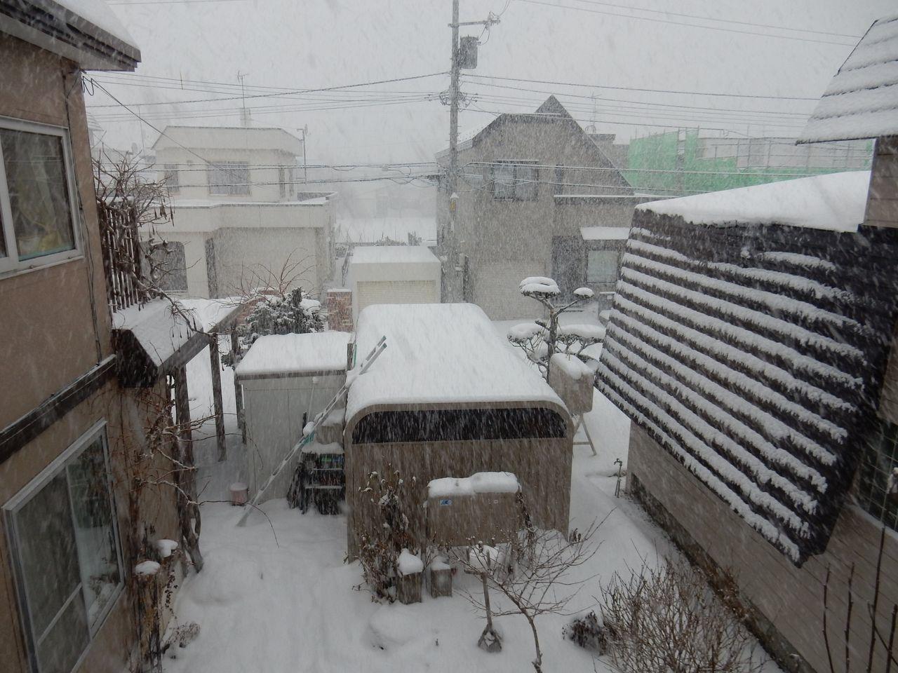 久々の雪らしい雪_c0025115_22011476.jpg