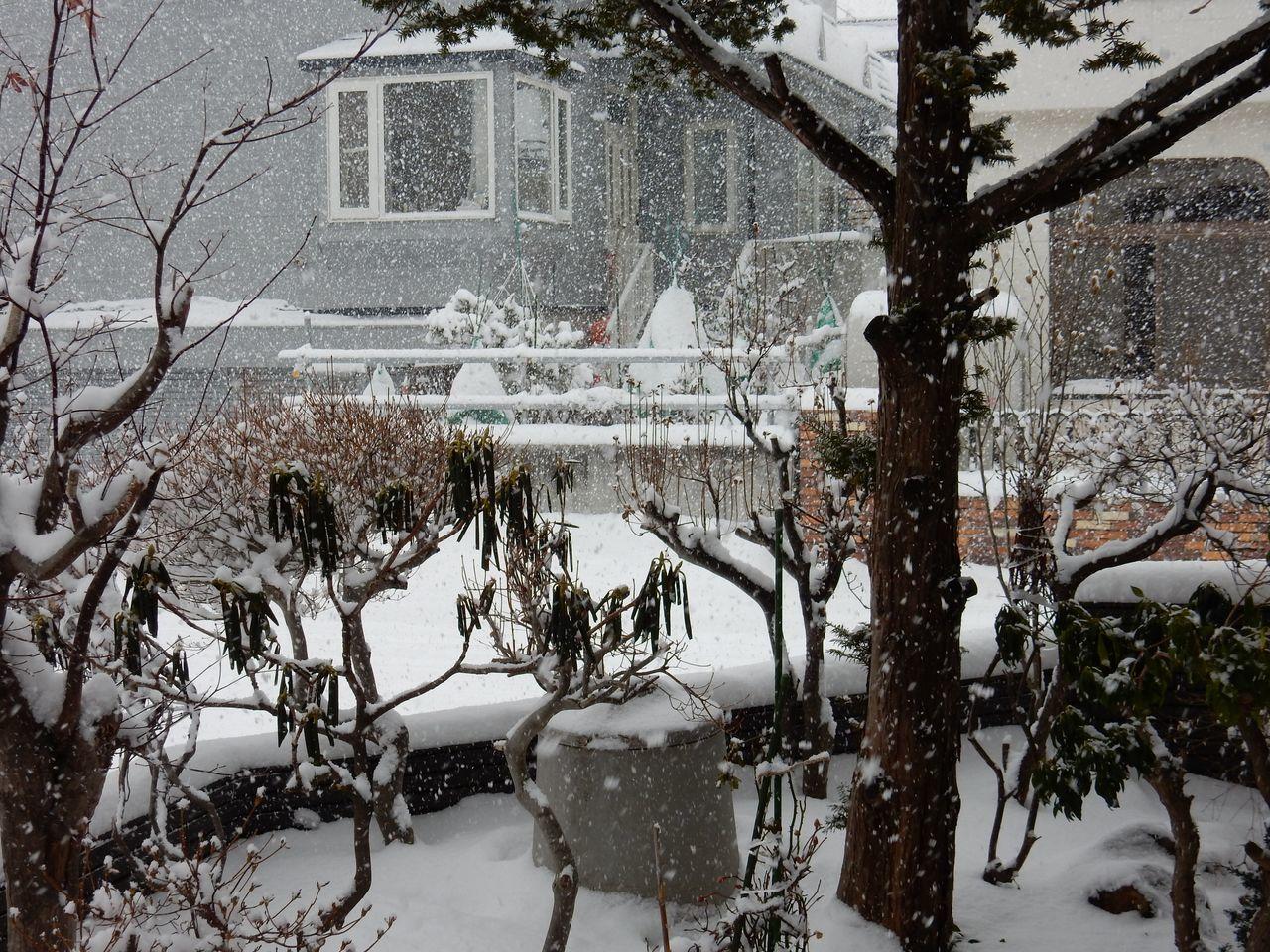 久々の雪らしい雪_c0025115_22011968.jpg