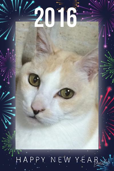 Happy New Year!_b0105719_23155166.jpg