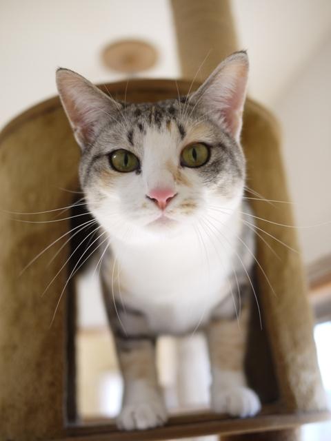 猫のお留守番 はるちゃんソルくん編。_a0143140_2075246.jpg