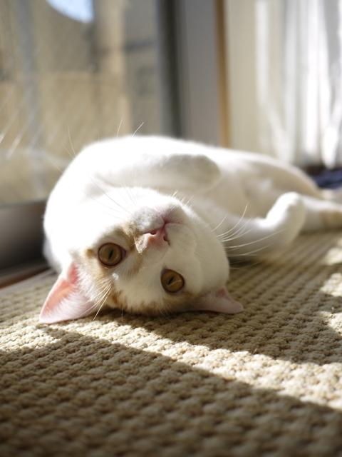 猫のお留守番 はるちゃんソルくん編。_a0143140_2095431.jpg