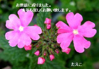 e0098241_8254561.jpg