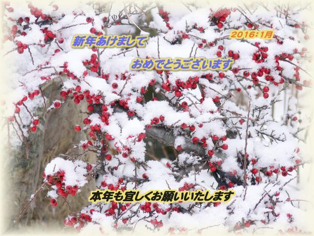 f0166871_8115938.jpg