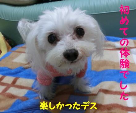 b0193480_1623852.jpg