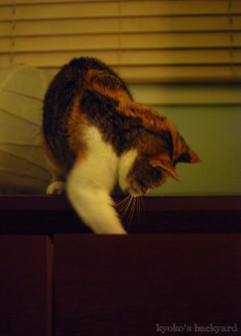 年末に猫の手を借りてみた。&年末のご挨拶。_b0253205_15171111.jpg