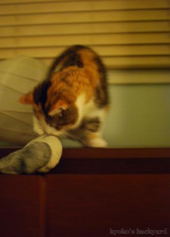 年末に猫の手を借りてみた。&年末のご挨拶。_b0253205_15180851.jpg