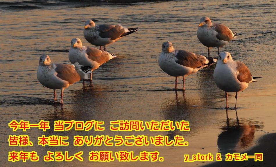 d0039021_1717556.jpg