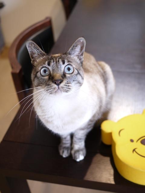 猫のお留守番 カン太くんルノーちゃん編。_a0143140_22283829.jpg