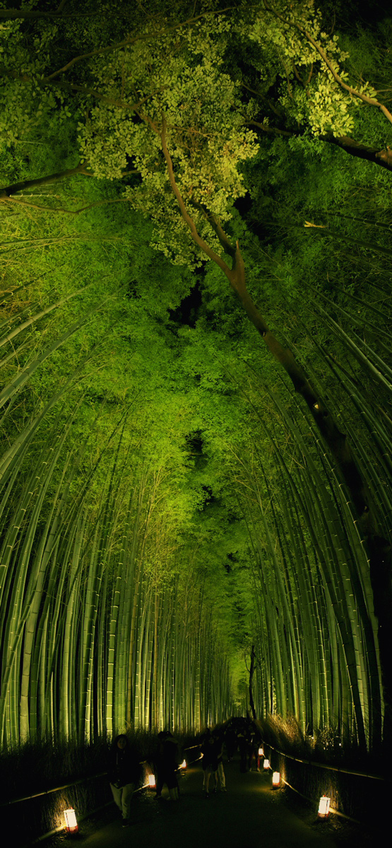 嵐山花灯路 2015                        _f0021869_0222693.jpg