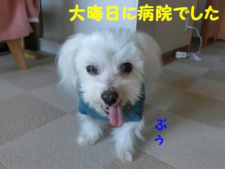 b0193480_14175962.jpg