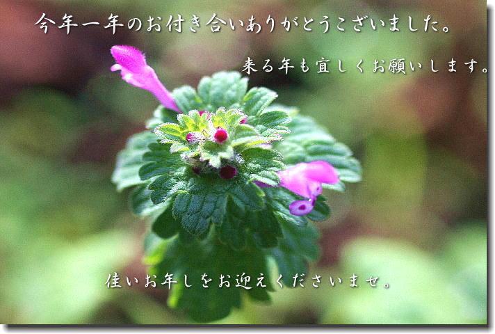 b0171185_13323282.jpg