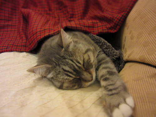 FUJI.... 41度の高熱で大晦日に動物病院へ!!_c0179785_21121561.jpg