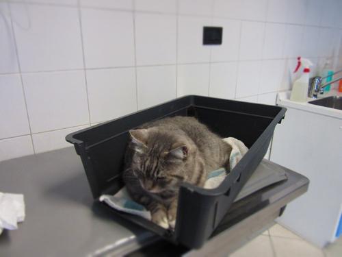 FUJI.... 41度の高熱で大晦日に動物病院へ!!_c0179785_21213490.jpg