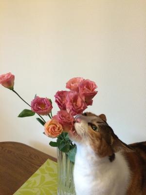 猫のいないお正月_d0260803_19083543.jpg