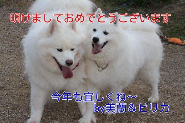b0073110_20404663.jpg