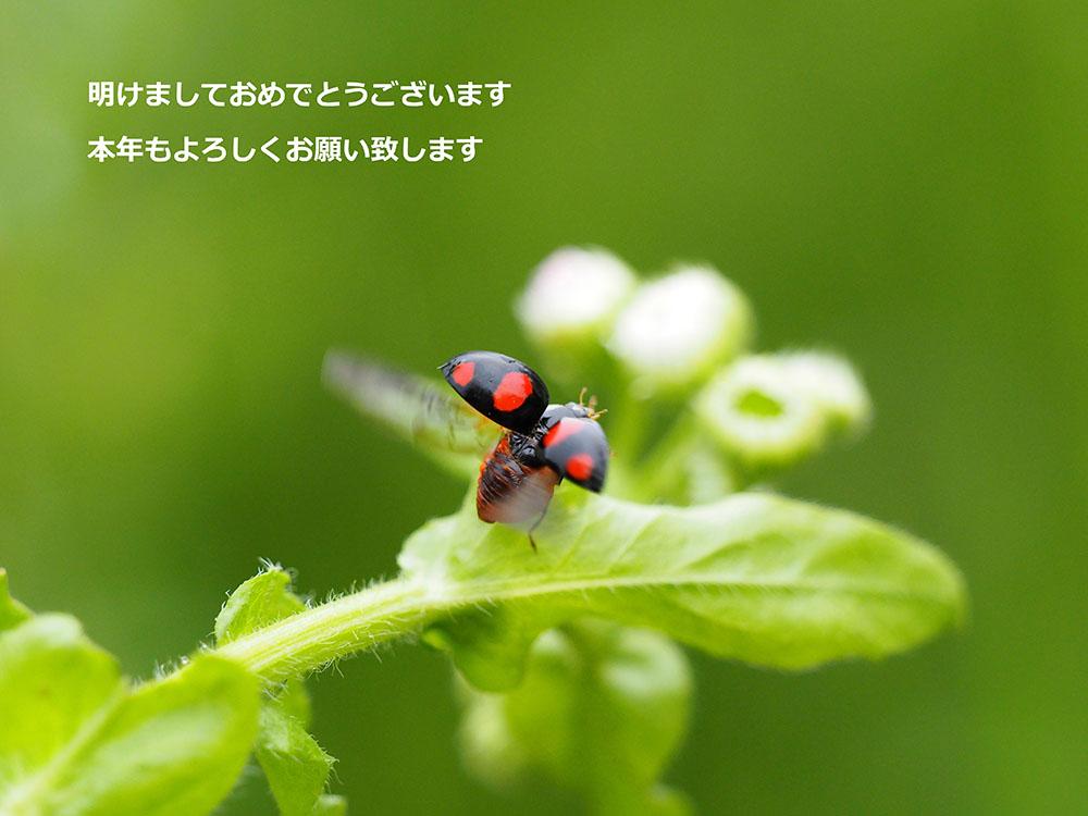 f0324026_2119936.jpg