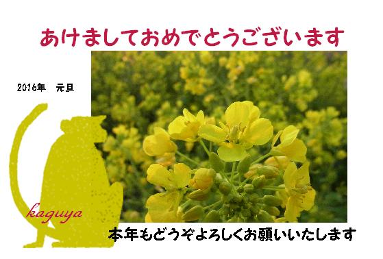 a0017634_7583459.jpg