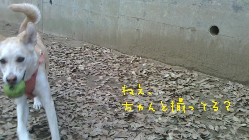 d0335707_11514018.jpg