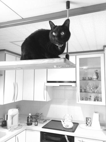 20160220 #blackcat #黒猫_d0176130_233133.jpg