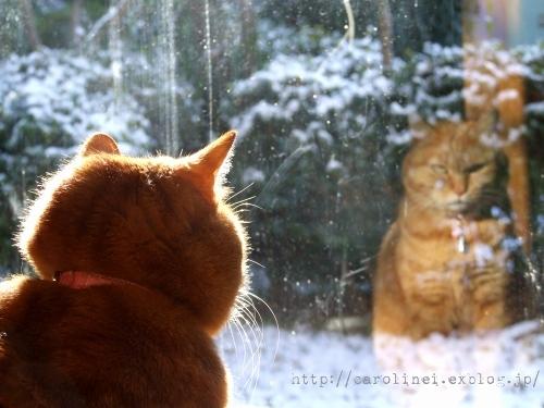 初癒し!年末年始の疲れが吹き飛ぶ、猫ブロガーから届いた新年のごあいさつ_d0350330_23263024.jpg