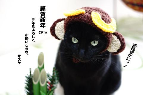 黒猫「サスケ」は猿のかぶり物で新年のごあいさつ