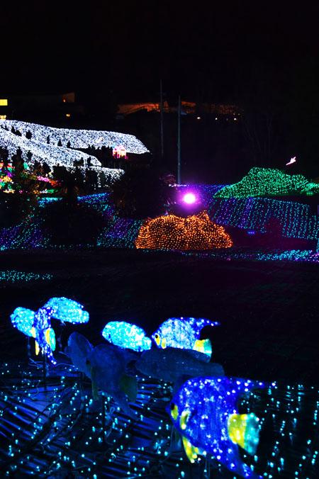 伊豆グランパル公園のイルミネーション2_a0263109_20201287.jpg