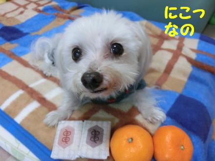 b0193480_1612733.jpg