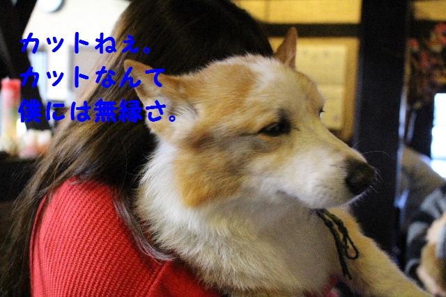 b0130018_1810329.jpg