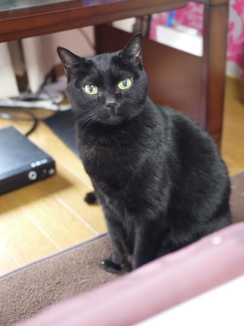 猫のお留守番 カーンちゃんイナちゃん編。_a0143140_20511292.jpg