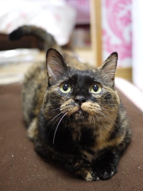 猫のお留守番 カーンちゃんイナちゃん編。_a0143140_20513190.jpg