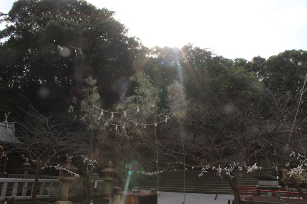 穏やかなお正月でした☆_a0174458_015846.jpg