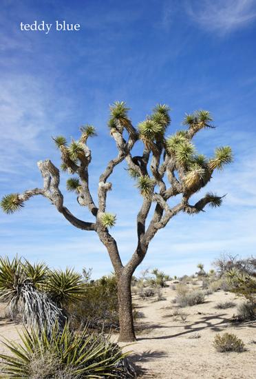 Joshua Tree National Park  ジョシュアツリー国立公園_e0253364_11545181.jpg