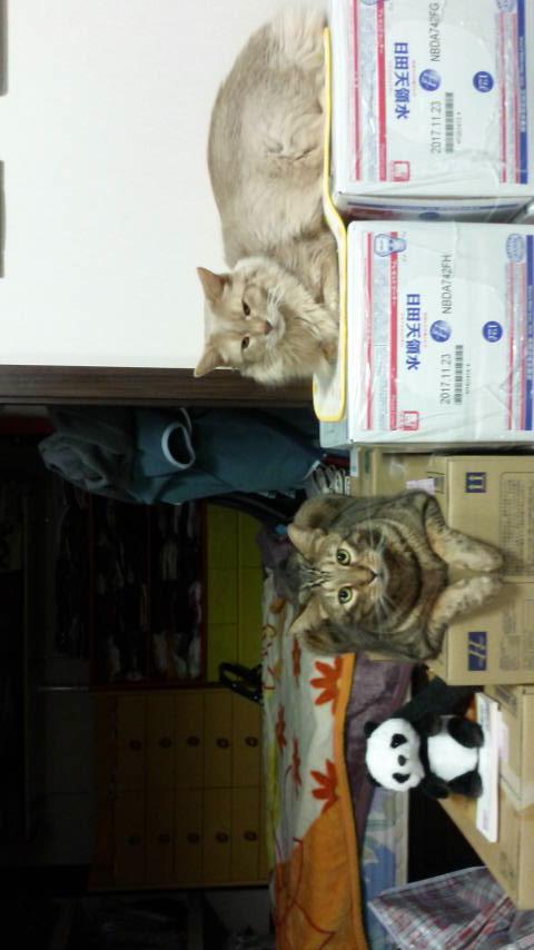 ネコ・空ちゃんと天ちゃんと、ものまねパンダ_d0339676_22345597.jpg