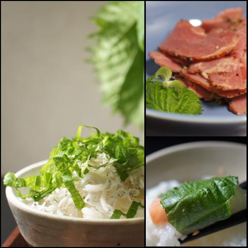 米飯でも肉でも^^_a0024690_02062174.png