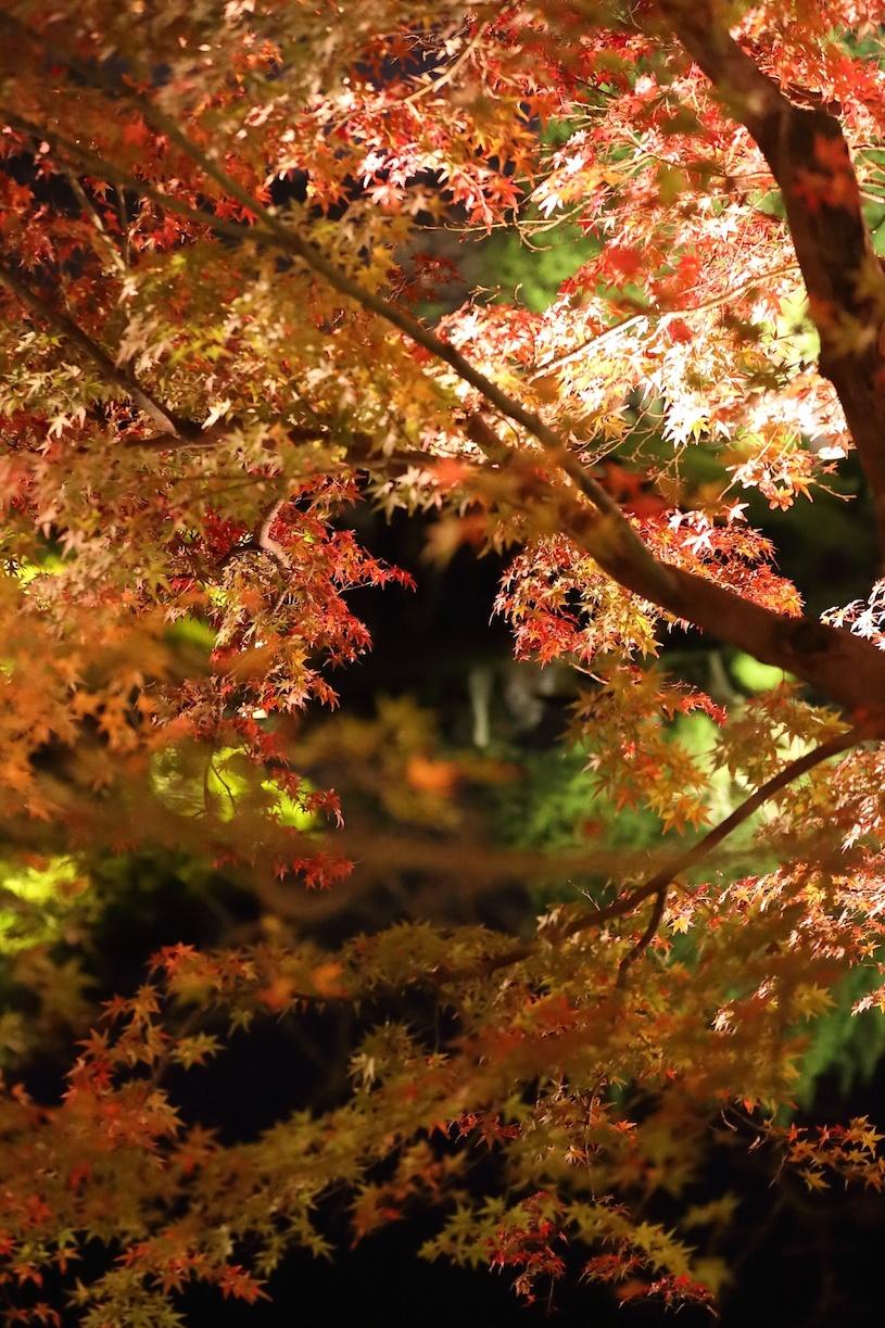 栗林公園 秋のライトアップ 2015 _d0081605_254445.jpg