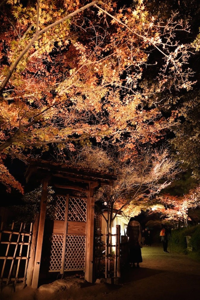 栗林公園 秋のライトアップ 2015 _d0081605_2544637.jpg