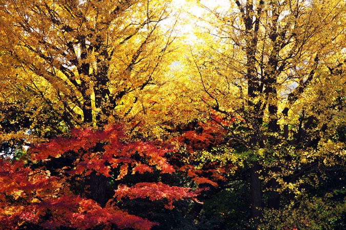 旧古河庭園の紅葉1_a0263109_13471259.jpg