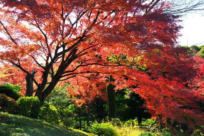 旧古河庭園の紅葉1_a0263109_13471436.jpg