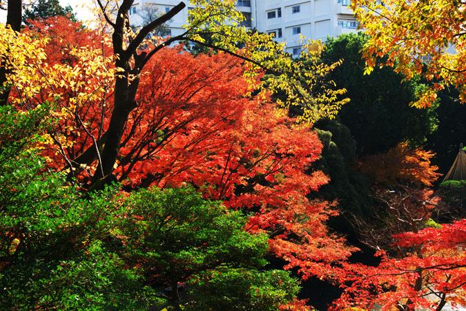 旧古河庭園の紅葉1_a0263109_13471813.jpg