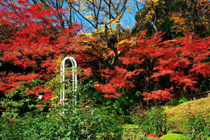 旧古河庭園の紅葉1_a0263109_1347215.jpg