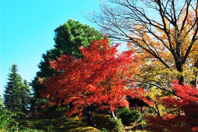 旧古河庭園の紅葉1_a0263109_13472321.jpg