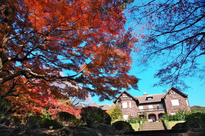 旧古河庭園の紅葉1_a0263109_13472786.jpg